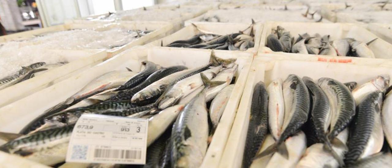 Estas son las razones por las que han estallado los pescadores asturianos