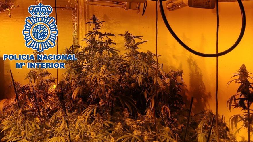 Desmantelada una plantación 'indoor' de marihuana en el barrio del Guadalquivir