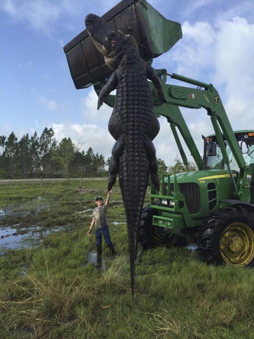 Mason Lightsey, un niño de 9 años, posa junto a un caimán de 4 metros y medio y 360 kilos cazado por su padre en Florida el pasado día 2 de abril. La imagen se ha propagado viralmente por la red.