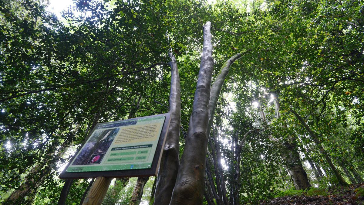 """Los jardines de Lourizán: un vergel de 54 hectáreas con """"árbores senlleiras"""""""