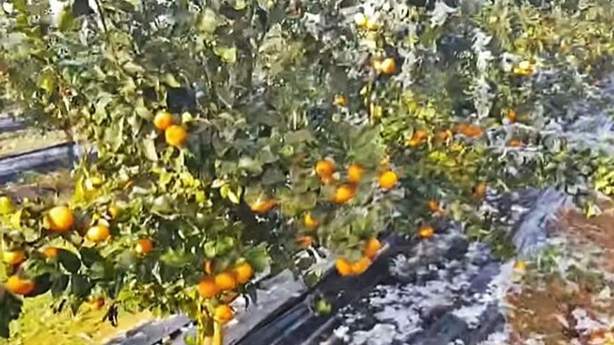 El frío daña las hortalizas del litoral pero ayuda a los cultivos de interior