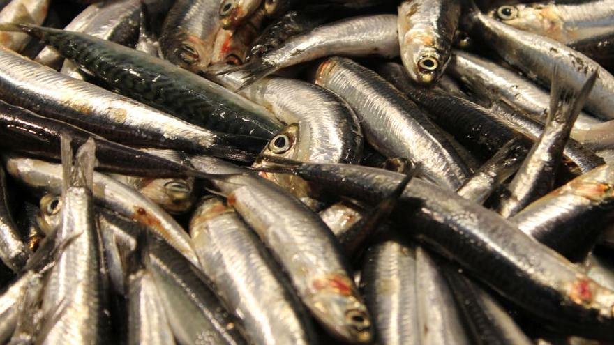 El consum de sardines prevé la diabetis tipus 2, segons un estudi