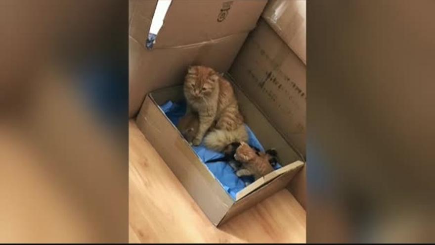 Una gata lleva a sus crías enfermas hasta una clínica veterinaria en Turquía