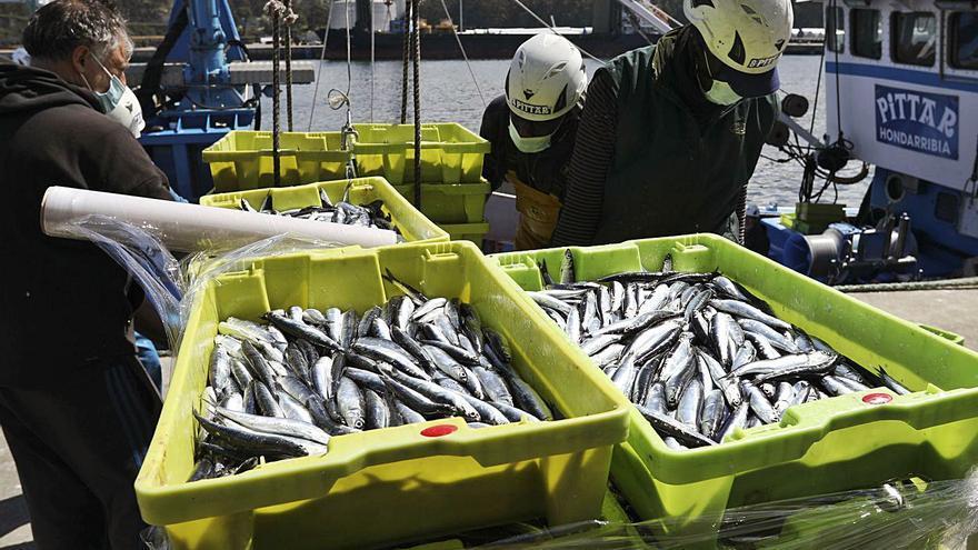 La rula de Avilés se anima con la primera gran bocartada del año: 125.000 kilos