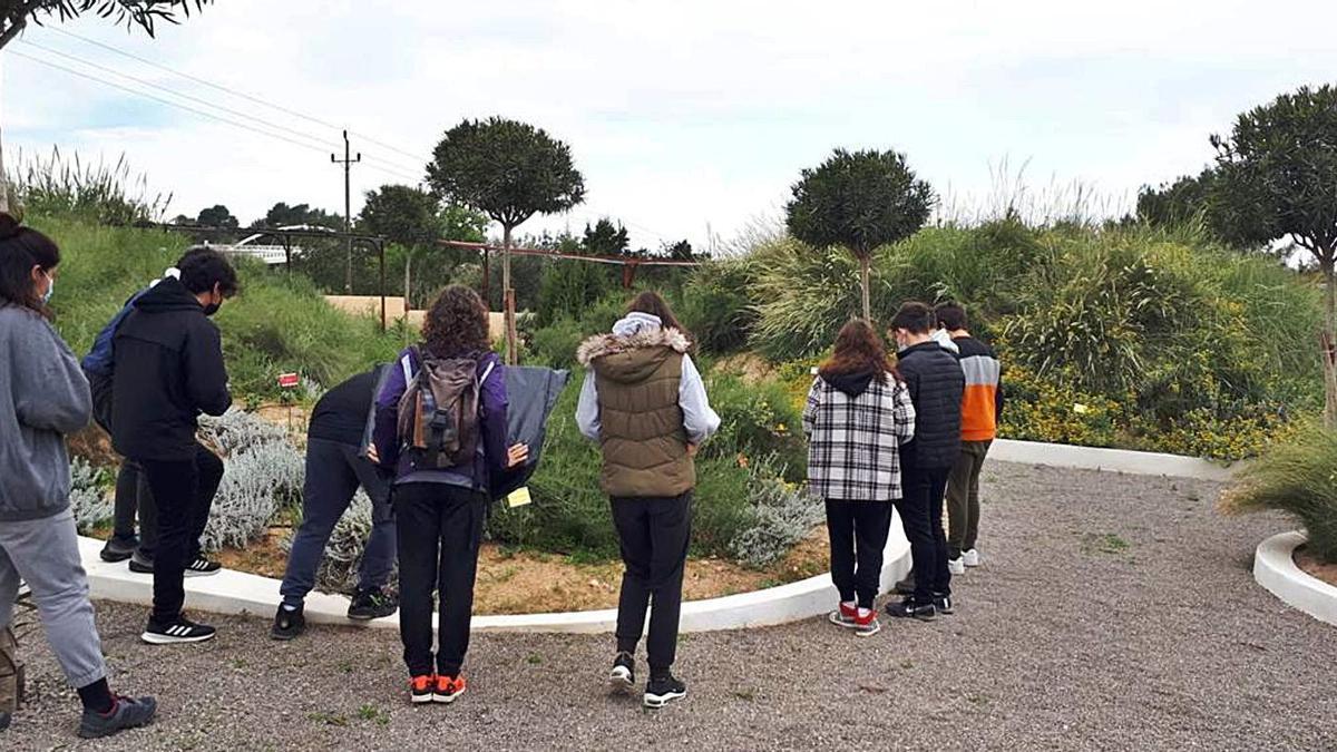 Los alumnos observan plantas características de las Pitiüses durante su recorrido.