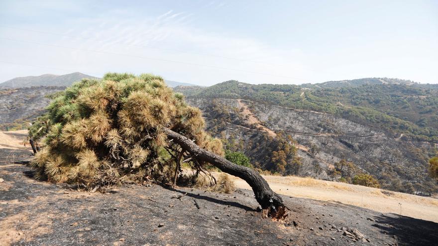 El éxodo rural y la urbanización del campo, factores clave en los incendios de sexta generación