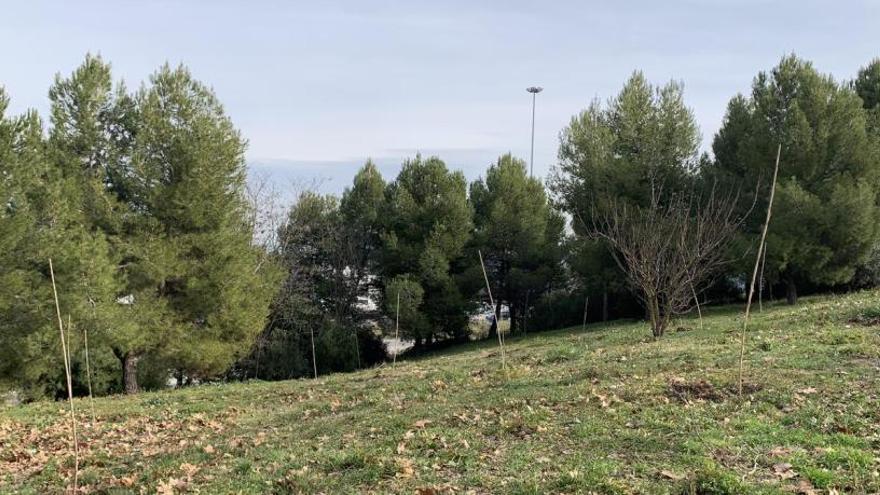 Dissabte vinent es plantaran vint-i-cinc alzines al barri de Cal Gravat de Manresa