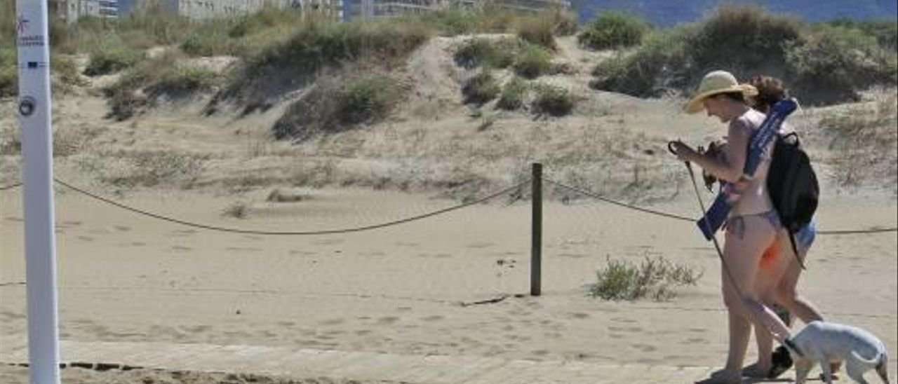 La alcaldesa de Gandia confirma que no habrá playa para perros este verano