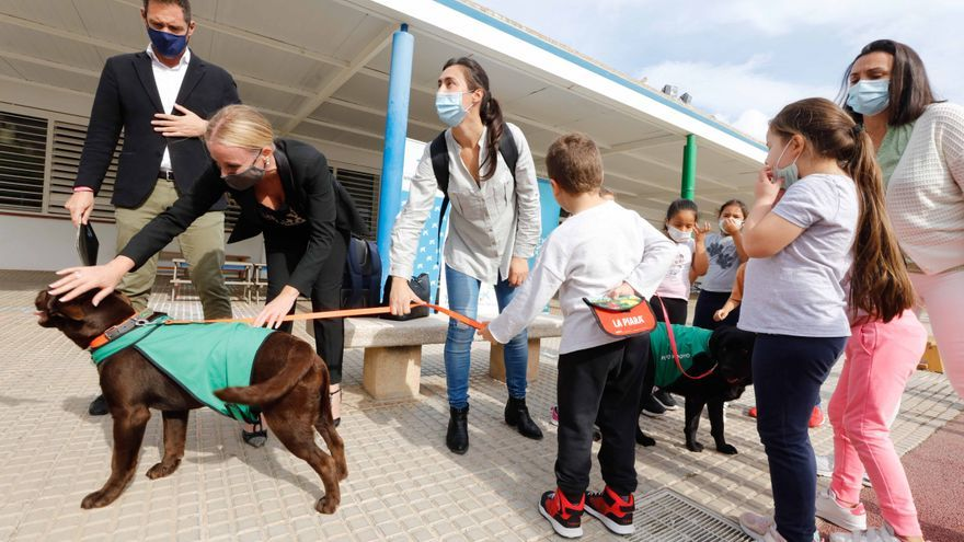 Nica, una nueva terapeuta de cuatro patas para los colegios de Ibiza y Formentera