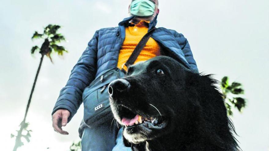 Perros guía: cuando su aliento es tu mirada