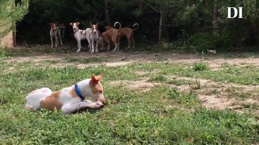 """Una perrera """"de lujo"""" en Ibiza"""