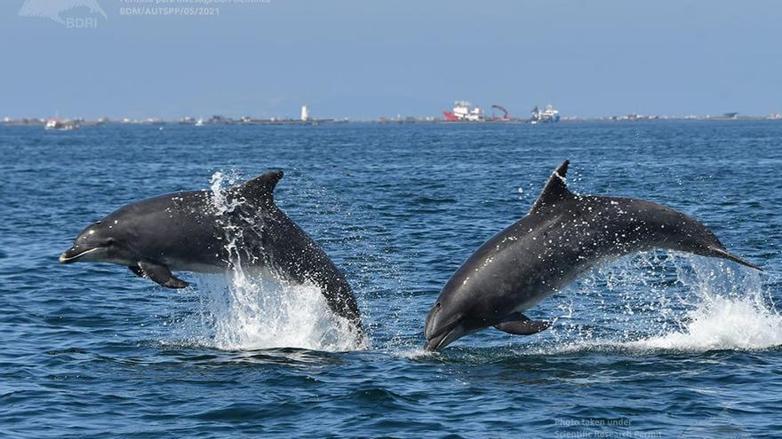 El estudio de los delfines se intensifica y genera refrescantes imágenes
