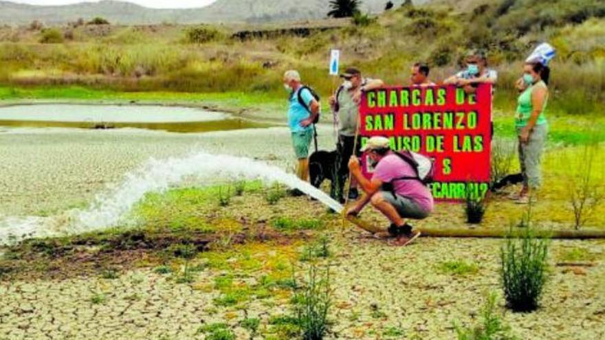 Los ecologistas intentan mantener viva la última charca de San Lorenzo