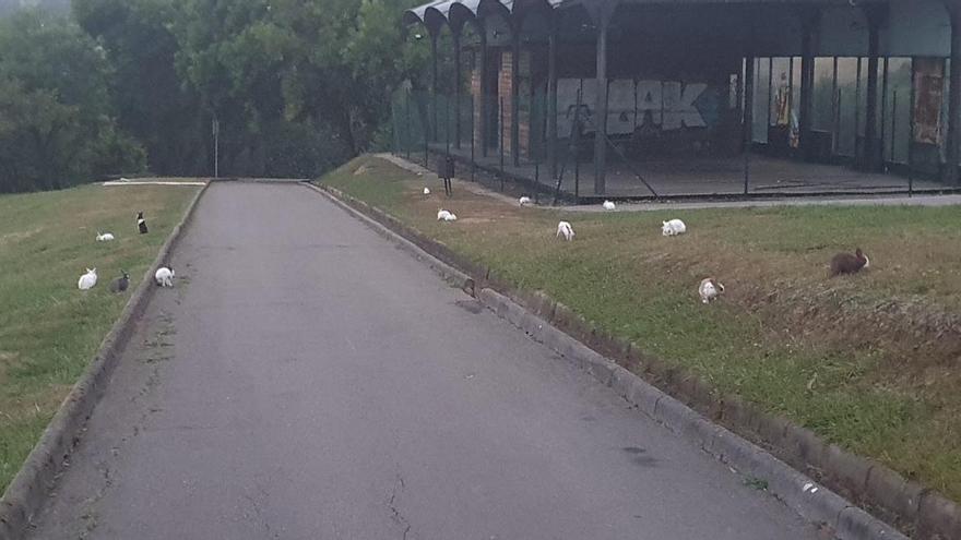 Los conejos se reproducen descontroladamente en el parque Purificación Tomás