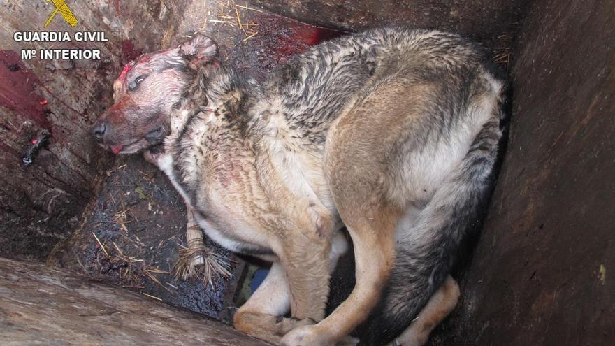 Investigado por romperle el cráneo a su perro en Viver y tirarlo a un contenedor