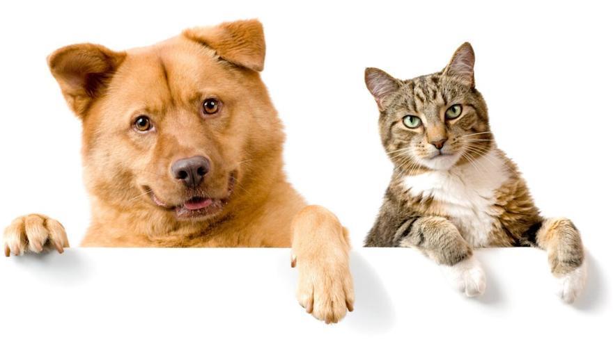Denuncian la «dictadura animalista» de la nueva ley de protección animal