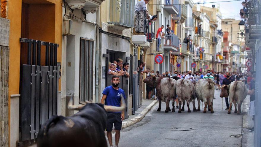 Segunda jornada de toros en Almassora con emoción y alta afluencia en la Vila