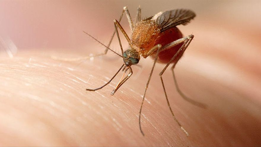 El truc definitiu per deslliurar-te de mosques i mosquits aquest estiu