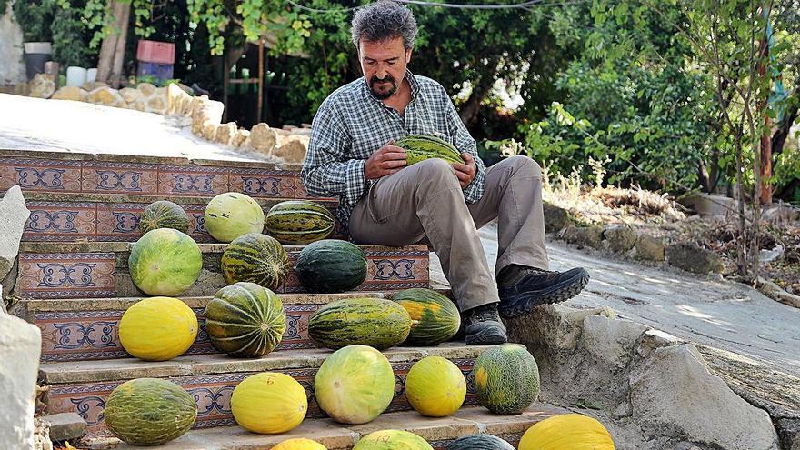 Recuperan en Montalbán variedades de melón desaparecidas hace casi 50 años