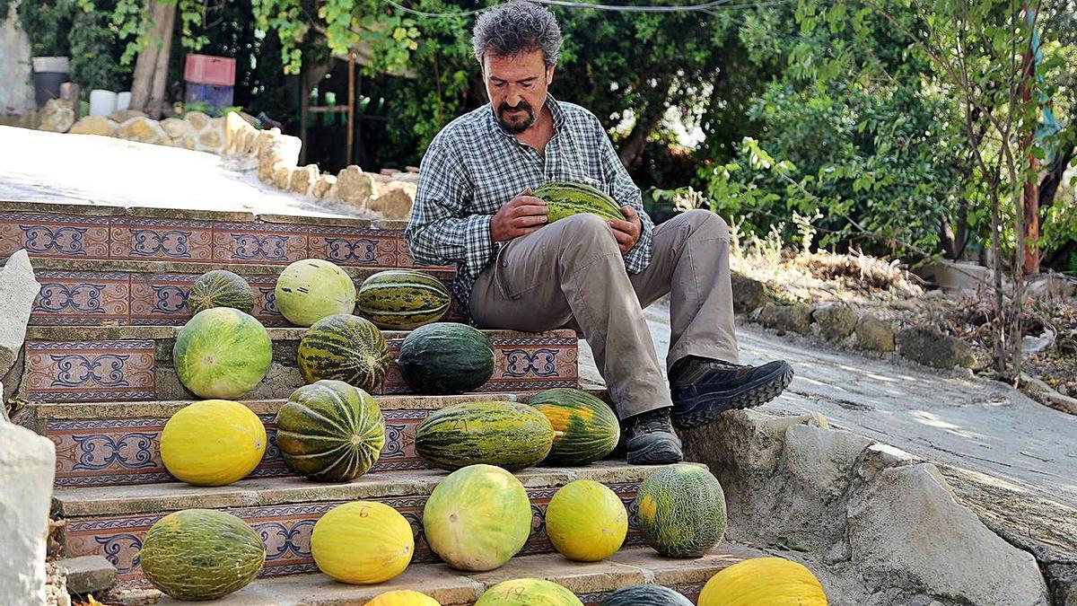 El agricultor montalbeño Victorio Domínguez, junto a algunas de las variedades de melón que ha recuperado.