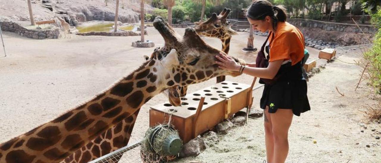 Una joven acaricia a una de las jirafas que alberga el Oasis Wildlife Fuerteventura, en el pueblo de La Lajita.