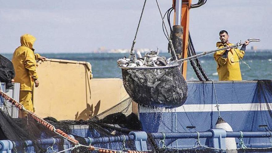 L'aqüicultura, una activitat clau per al subministrament de peix, és sostenible?