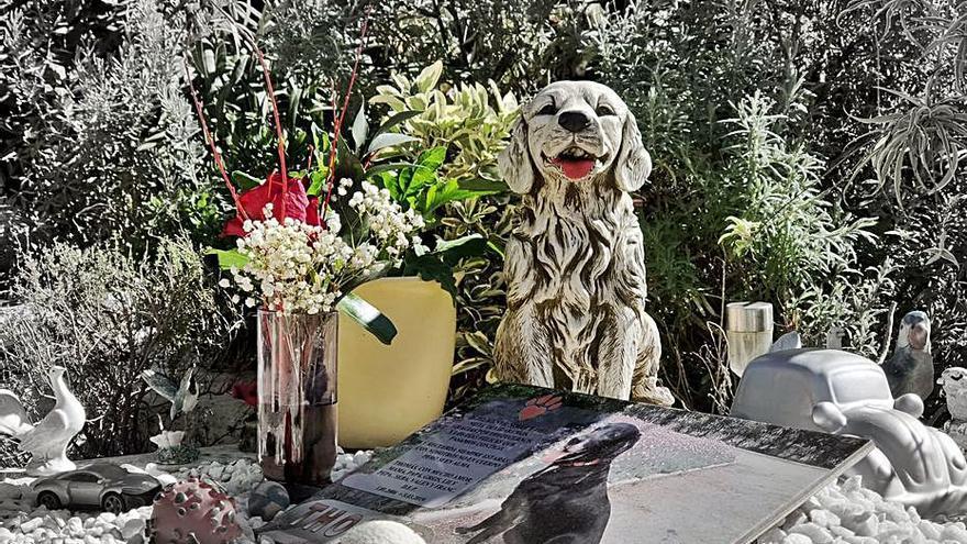 Sena, casi 30 años de despedidas especiales para las mascotas