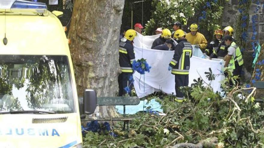 Trece muertos en Madeira por la caída de un árbol