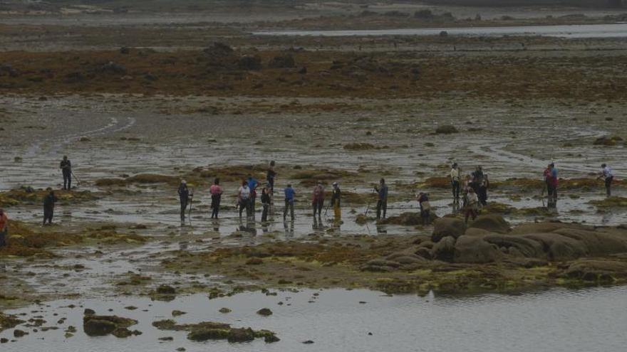 Sin ayuda y sin un lugar donde arrojarlas, la dura lucha de Vilanova contra las algas