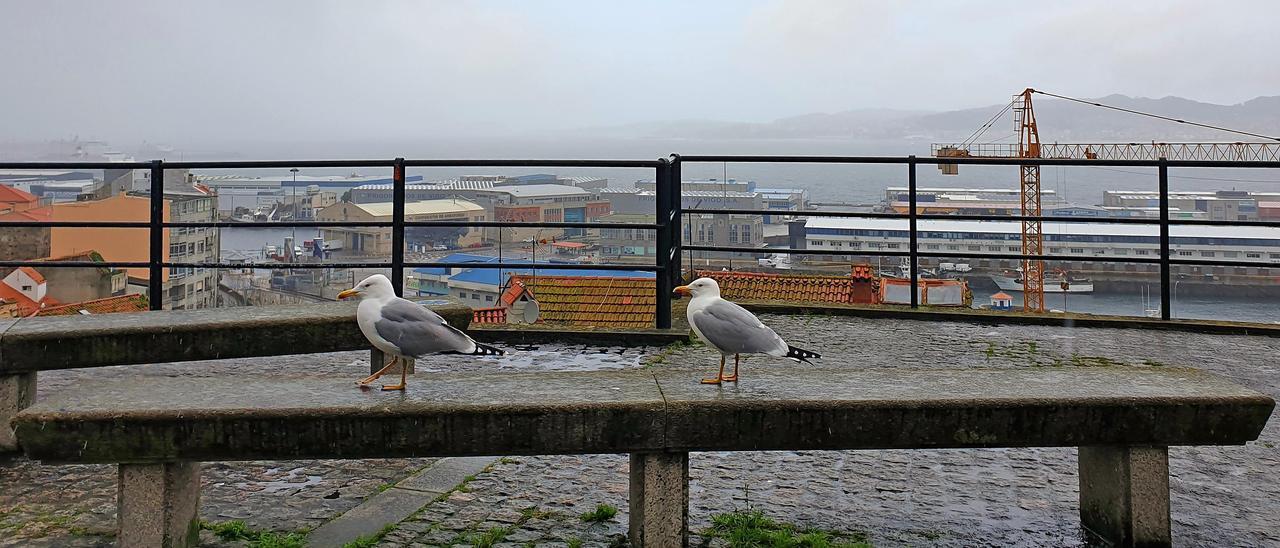 Dúas gaivotas no mirador do Paseo de Alfonso