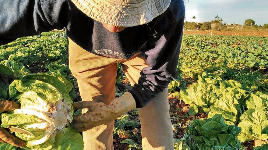 Bedürftige ernähren, Produzenten stärken - so geht eine Stiftung auf Mallorca vor