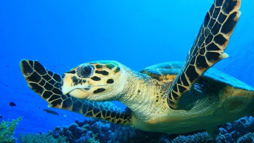 Dia mundial dedicat a les tortugues marines