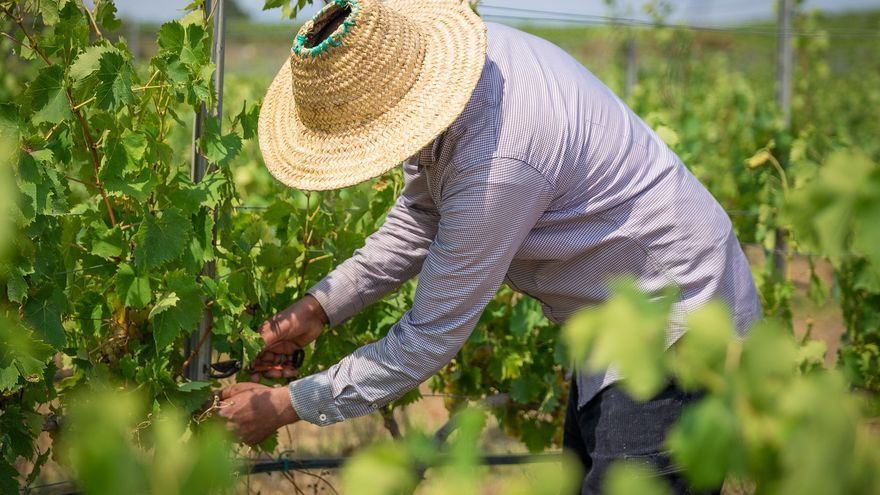 Unió de Pagesos demana als cellers responsabilitat i coherència en els preus de compra del raïm i del vi