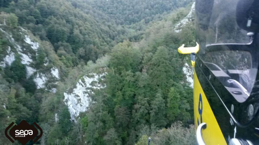 Muere un leñador praviano en un monte de Colunga al caerle un árbol encima