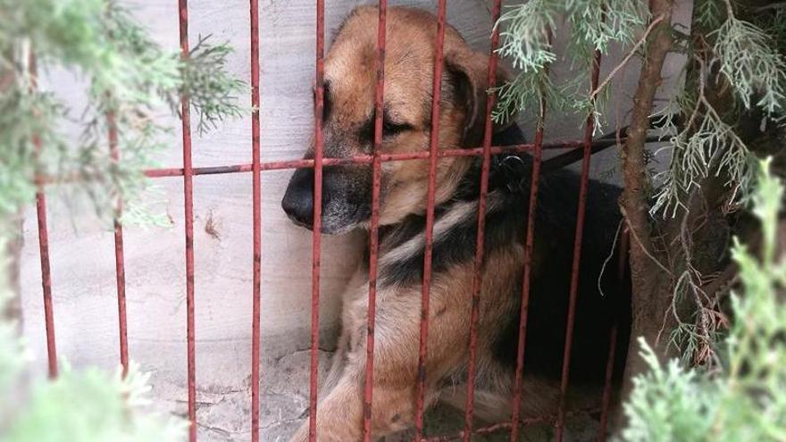 Rescatan a un perro que quedó atrapado entre una pared y una valla en Dénia