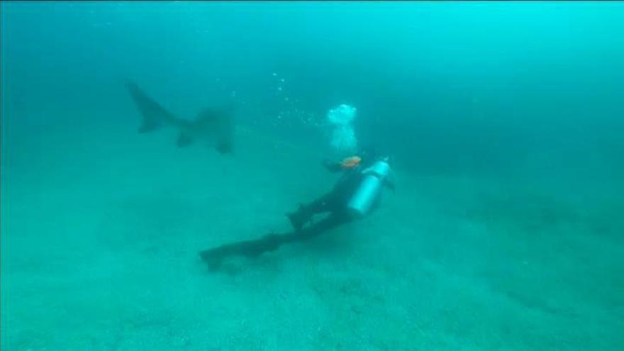 Un buceador libera a un tiburón de una bolsa de plástico