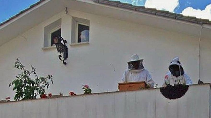 Retiran un enjambre de una terraza maliayesa