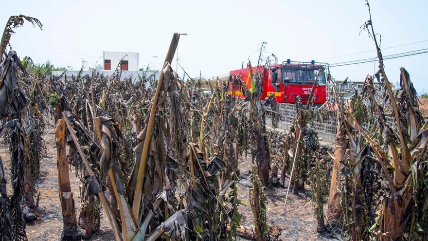 Declaran desastre natural en el sector agrario de La Palma tras el incendio de El Paso