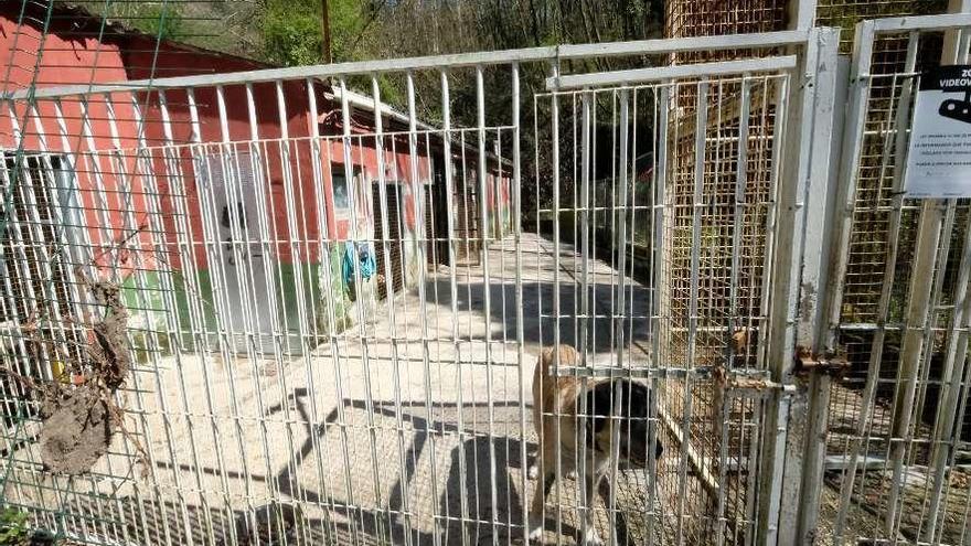 La perrera de Mieres devolvió a sus dueños la mitad de los perros que recogió desde diciembre
