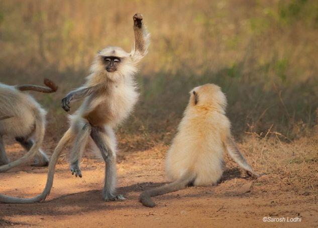 fotos-divertidas-animales-3.jpg