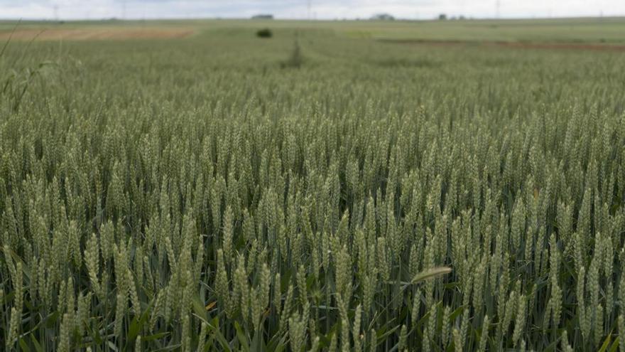 Veinte zonas de Zamora, vulnerables a la contaminación por nitratos