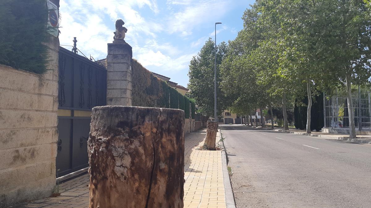 Plátanos talados en la calle Isla de la Gomera. El ayuntamiento denunció que les habían practicado taladros para inyectarles herbicidas. Finalmente murieron y tuvieron que ser eliminados.