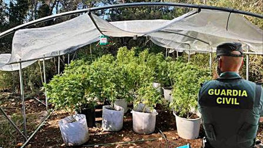 Desmantelan una plantación de cannabis en Ibiza