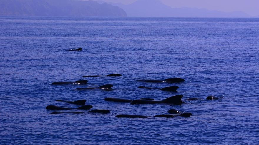 Los valles submarinos de Mazarrón se integran en la Red de Áreas Marinas Protegidas de España
