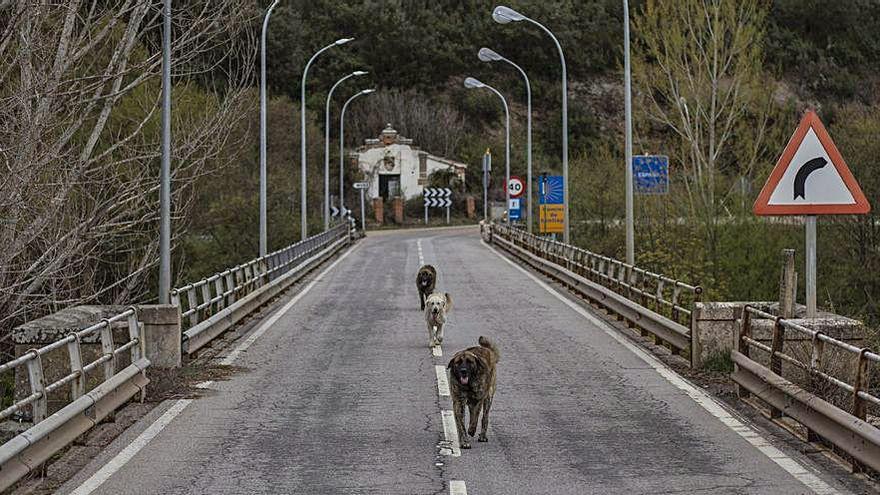 Varios perros cruzan la frontera entre España y Portugal, en dirección al control donde se ubican las policías de ambos países.