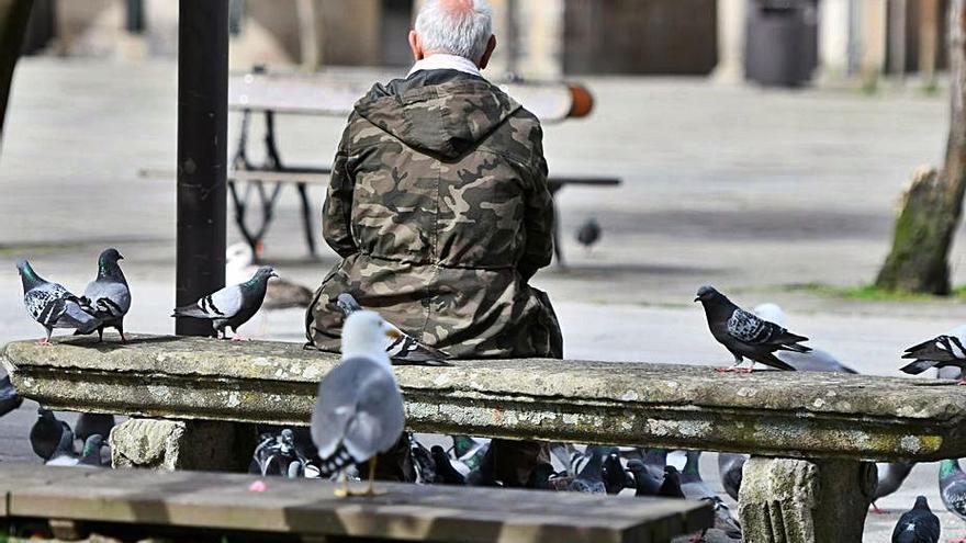Pontevedra mantiene a raya las colonias de gaviotas con la retirada de 130 nidos