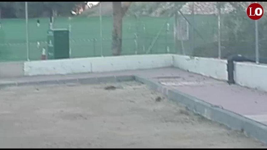 Las ratas campan a sus anchas en un parque infantil de Murcia