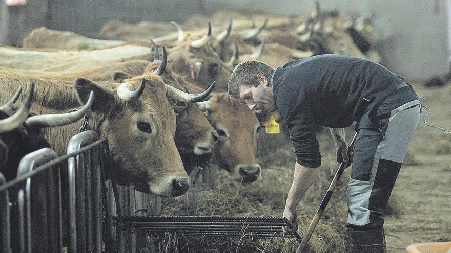Agricultura modificará la norma que regule las cuadras para que no afecte a Asturias