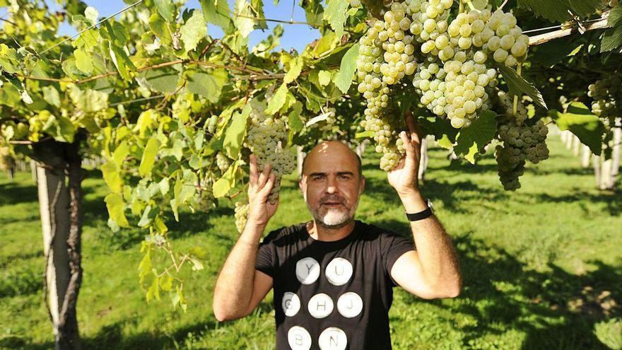 La DO Rías Baixas rondará los dos millones de kilos de uva esta campaña en la subzona Ribeira do Ulla