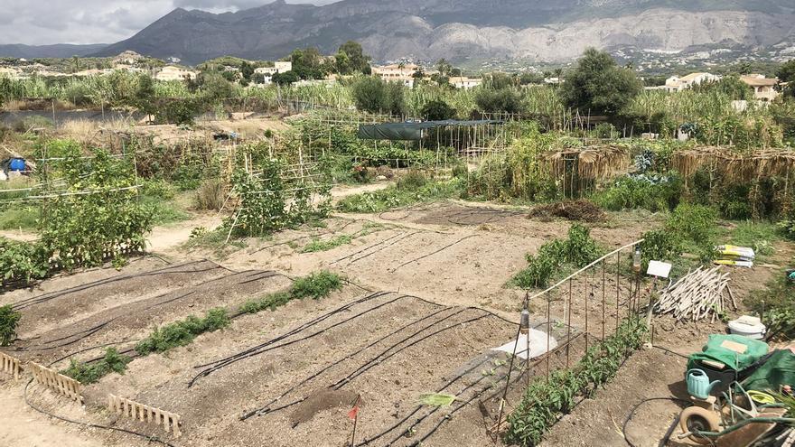 Altea reanuda la formación en agricultura ecológica para huertos urbanos